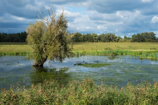 Swamp between De Kievitswaard and Beatrixhaven.