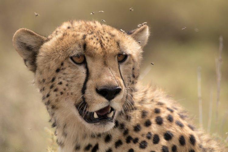 Tom Scherlis Tanzania-4679
