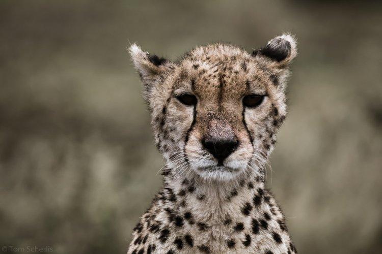 Tom Scherlis Tanzania-5512