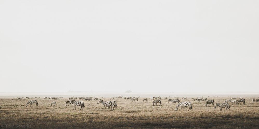 Tom Scherlis Tanzania-5619