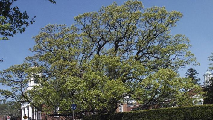 mc-apphoto-600-year-old-tree3-20170424.jpg