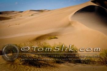 Glamis Dune Trip 11-11-11-217