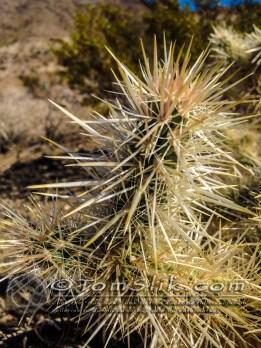 Joshua Tree Astro-Photograpy 11-2-2013 0055