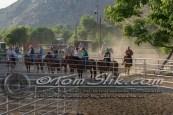 Lynn & Sam Team Cow Sorting 5-18-2016 0012