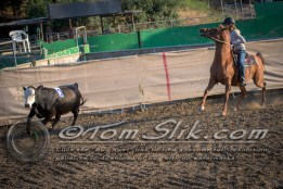 Lynn & Sam Team Cow Sorting 5-18-2016 0030