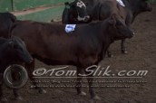 Lynn & Sam Team Cow Sorting 5-18-2016 0207