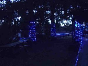 Picture of Blue LED Xmas Lights Outdoors, our home south yard, showing fence, spruce tree, ditch bridge, and ramp decorations.