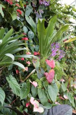 Plants on the 'mountain' in the Cloud Forest