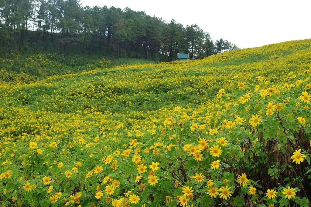 メーホンソーンのひまわり畑