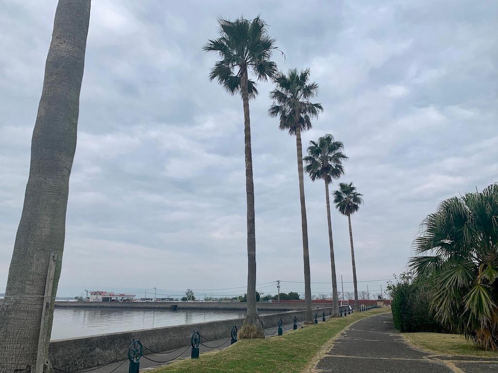 森園公園の椰子の木