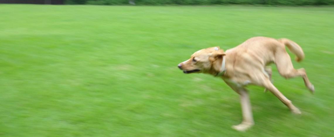 走るのが大好き