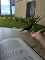 The Zebra Doves became quite familiar friends (as long as I kept feeding them).