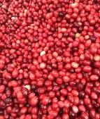 More cranberries.