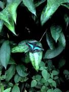 Wow! Vlinder :)
