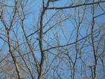 medžiai_pavasaris