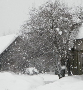 sninga_Agnusyte2011Foto