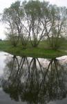 medžių_atspindys_vandenyje