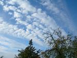 dangus_medžiai_Agnusyte_foto