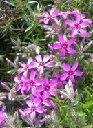 gėlytės_Agnusyte_foto