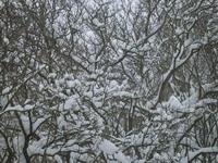 žiema_liuda2011foto