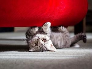 kačių pareigos
