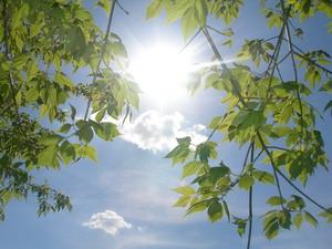 medžiai_saulėje