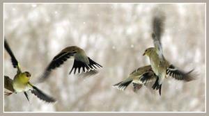 paukščiai pavasaris