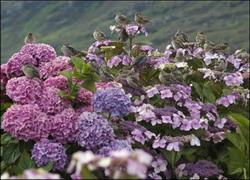 paukščiai_gėlėse