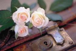 rožės ir spyna