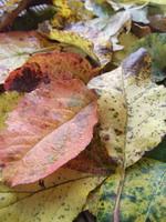 rudnes lapai Agnusyte 2012
