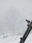 sninga_Agnusyte2009gruodis
