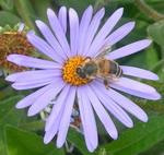 gėlė_su_bite
