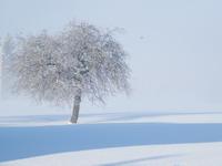 žiemužė-Agnusyte2011foto