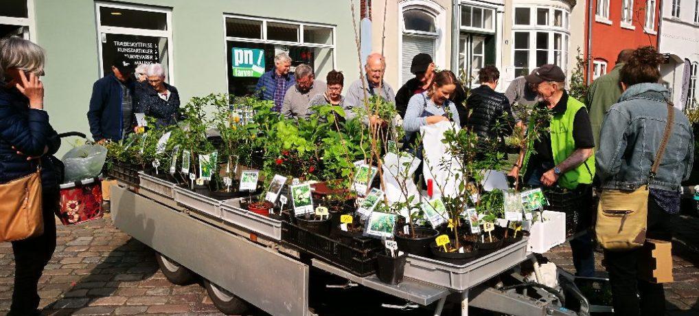 Tønder: Plantemarkedet blev en succes
