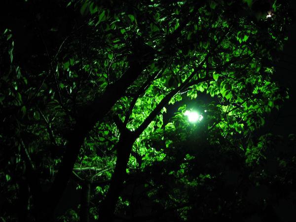 林の中の街灯