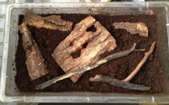 カブトマットの上に枝や木の皮をまんべんなく配置