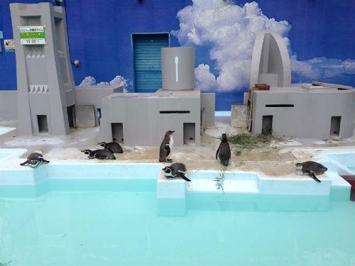 フンボルトペンギン 野毛山動物園