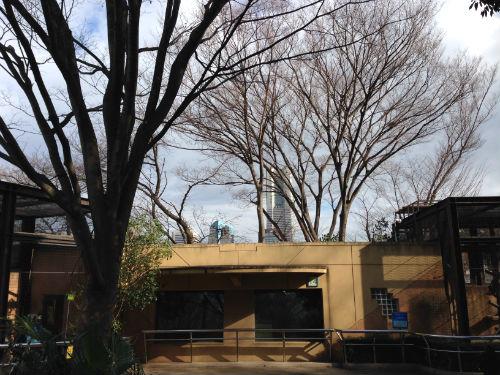 野毛山動物園から望むランドマークタワー