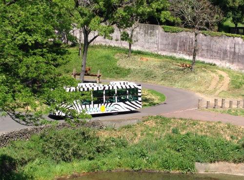 ライオンバス 多摩動物公園
