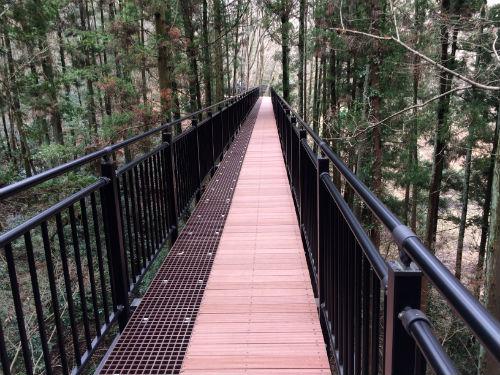 森の空中回廊の最高地点