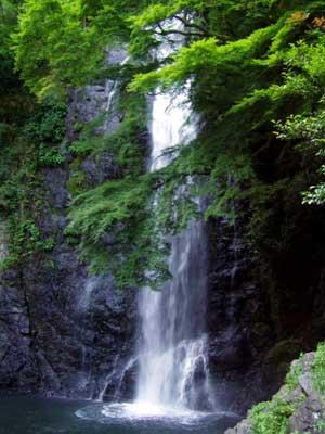 waterfall_of_minoh_summer1.jpg