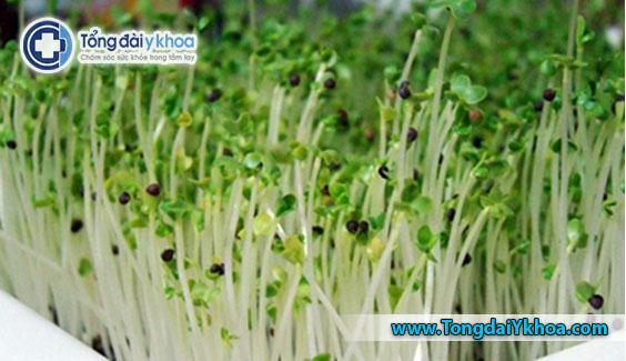 Rau mầm phát triển trong điều kiện ẩm ướt, ấm áp và là môi trường lý tưởng cho sự phát triển của vi khuẩn.Nấu rau mầm có thể giúp giảm nguy cơ ngộ độc thực phẩm.