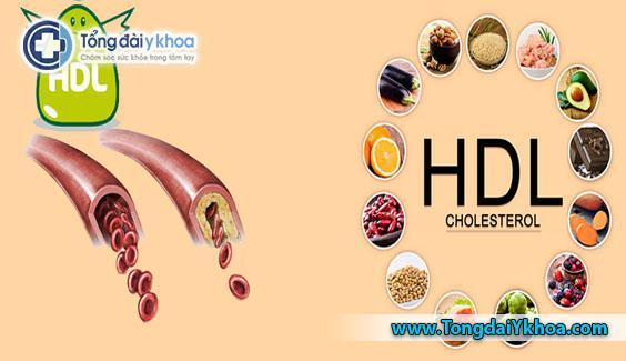 Hàm lượng HDL cao có tác dụng chống Oxy hóa và chống viêm, giảm nguy cơ mắc bệnh tim