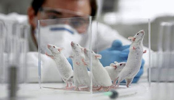 vaccine vac xin corona can thu nghiem tren dong vat