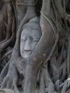 Buddha in the Tree in Ayutthaya