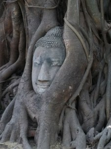 Buddha in the Tree in Ayutthaya