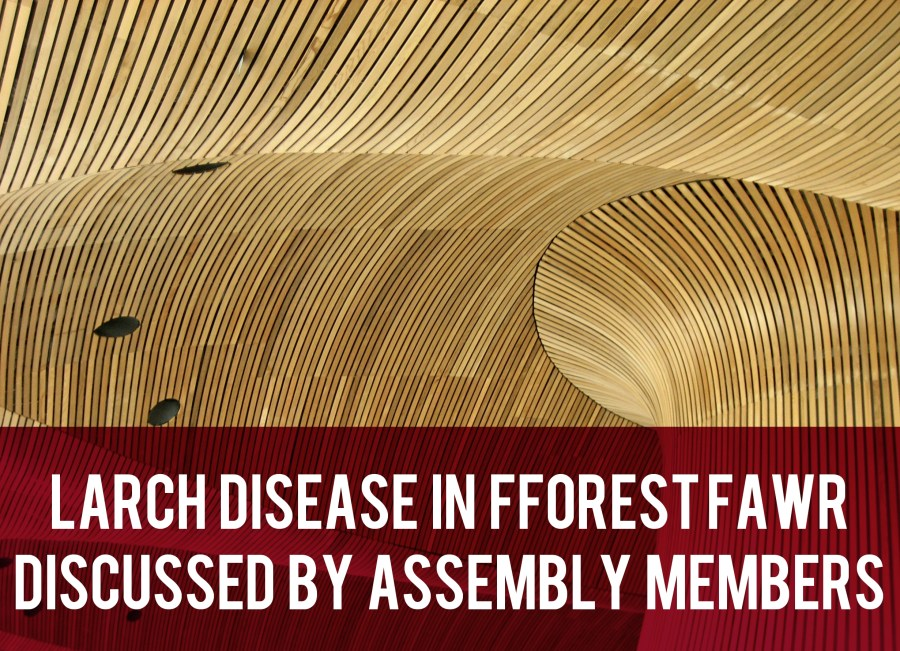 Larch Disease in Fforest Fawr Discussed by Assembly Members header