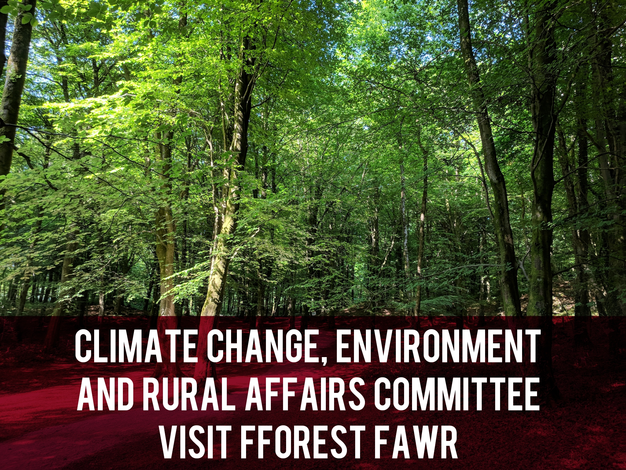 Climate Change, Environment and Rural Affairs Committee Visit Fforest Fawr header