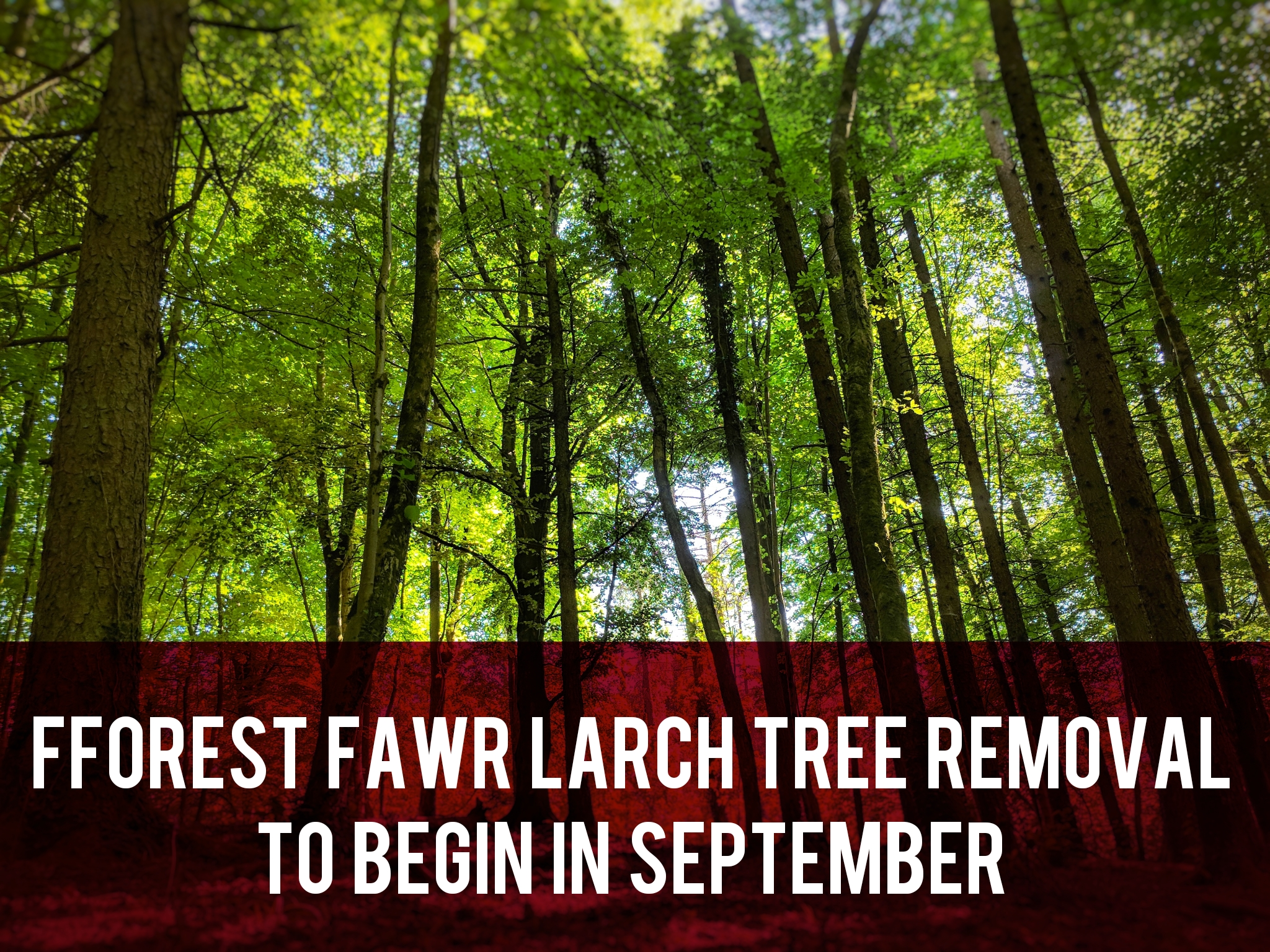 Fforest Fawr Larch Tree Removal header