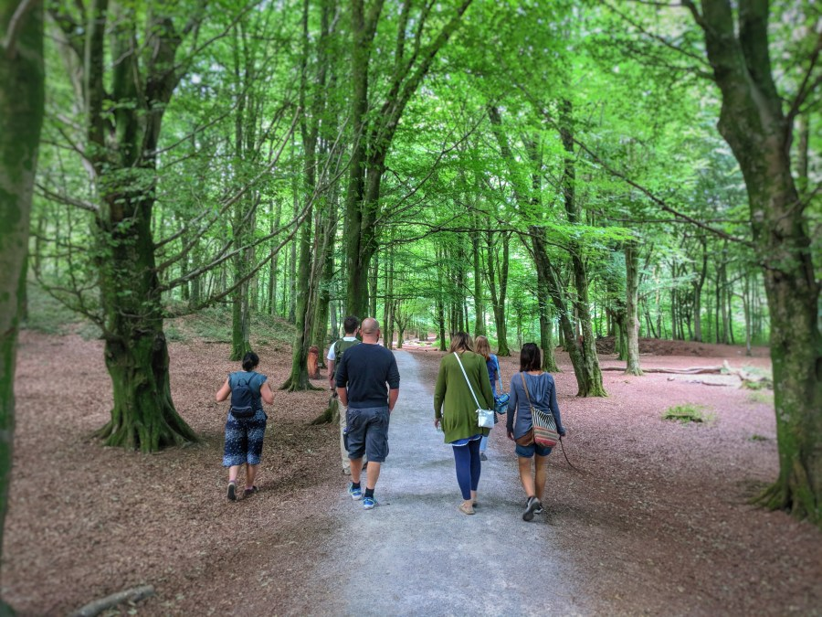 Mindful walking in Fforest Fawr